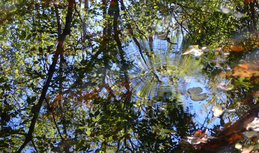 Reflections in the Woods