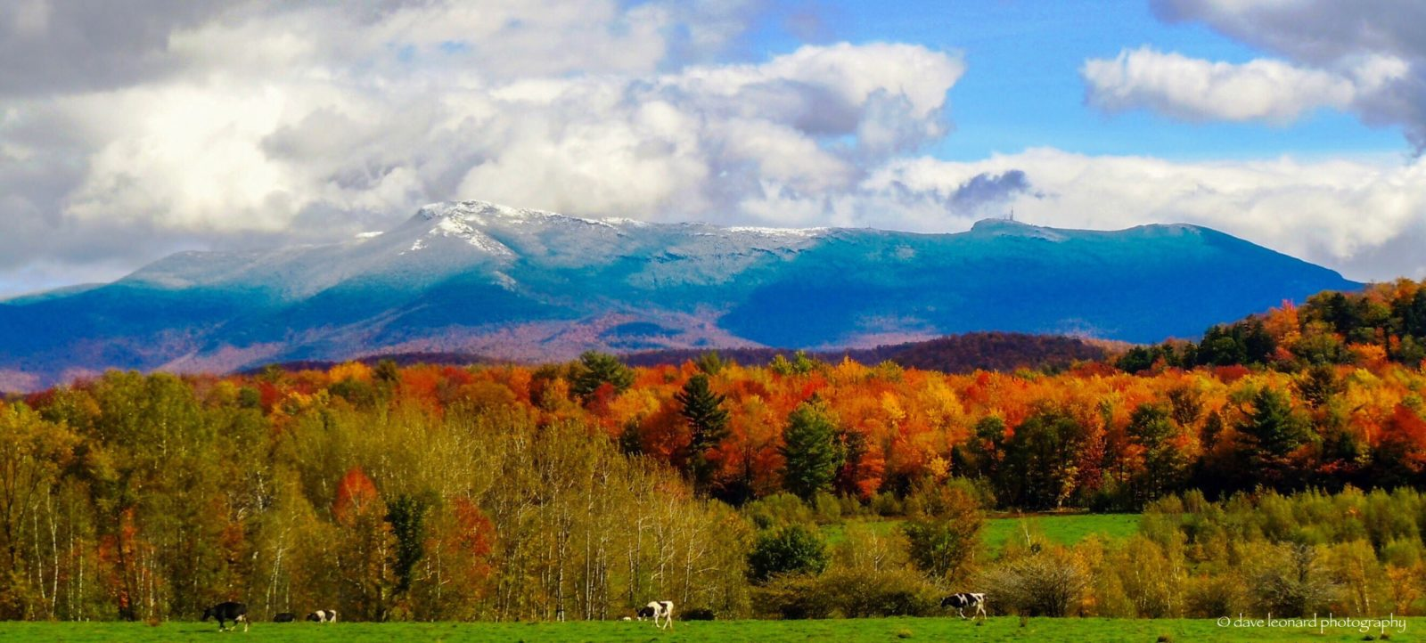 Back yard in Vermont