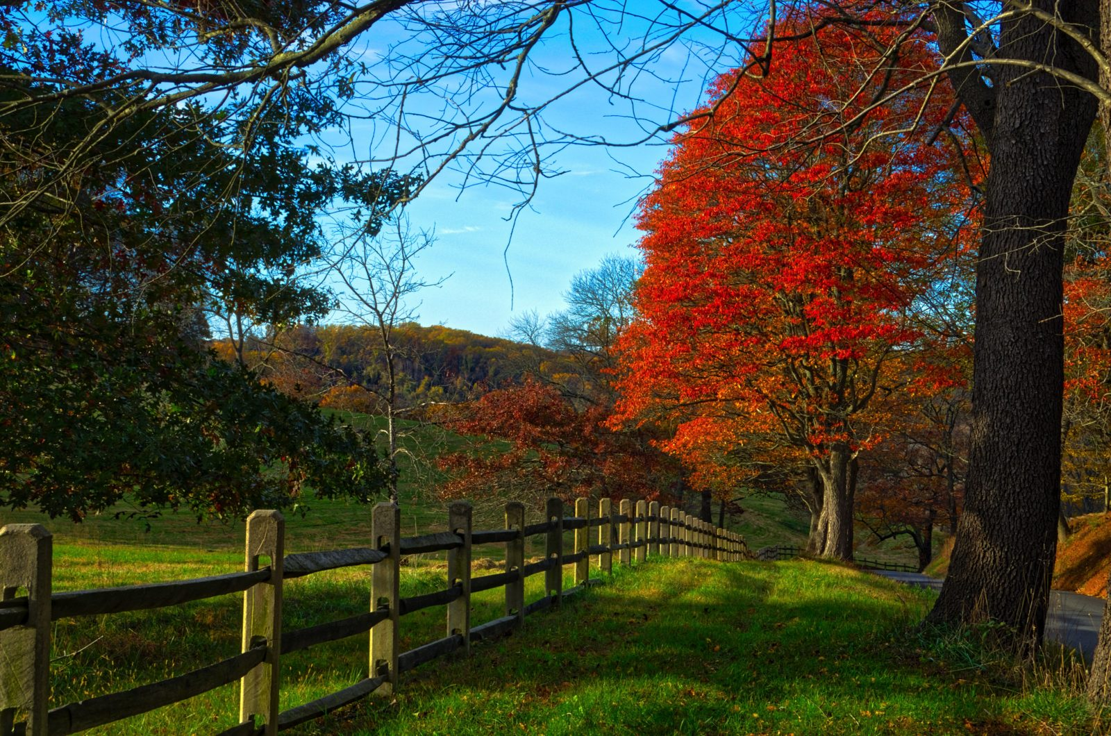 Country Lane in the Fall