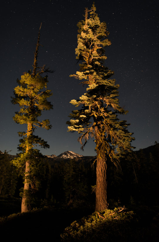 Mt. Lassen In Moon Light