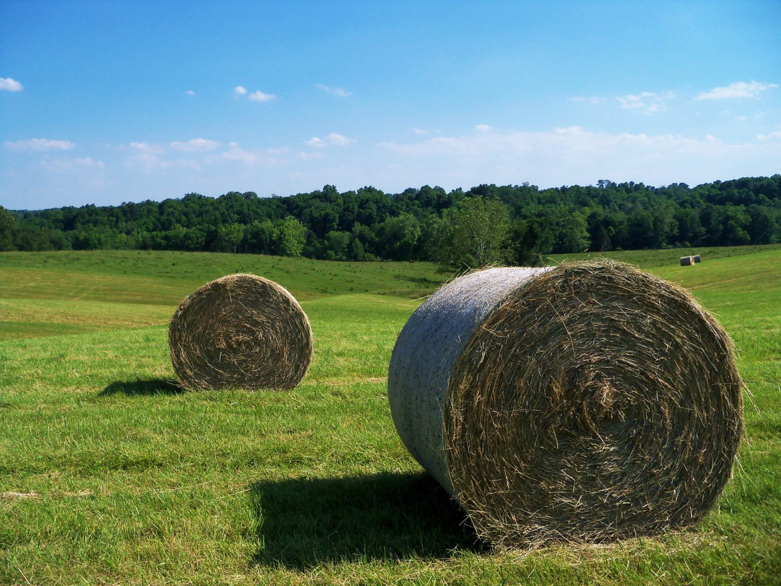 Hay Bales in the Sun