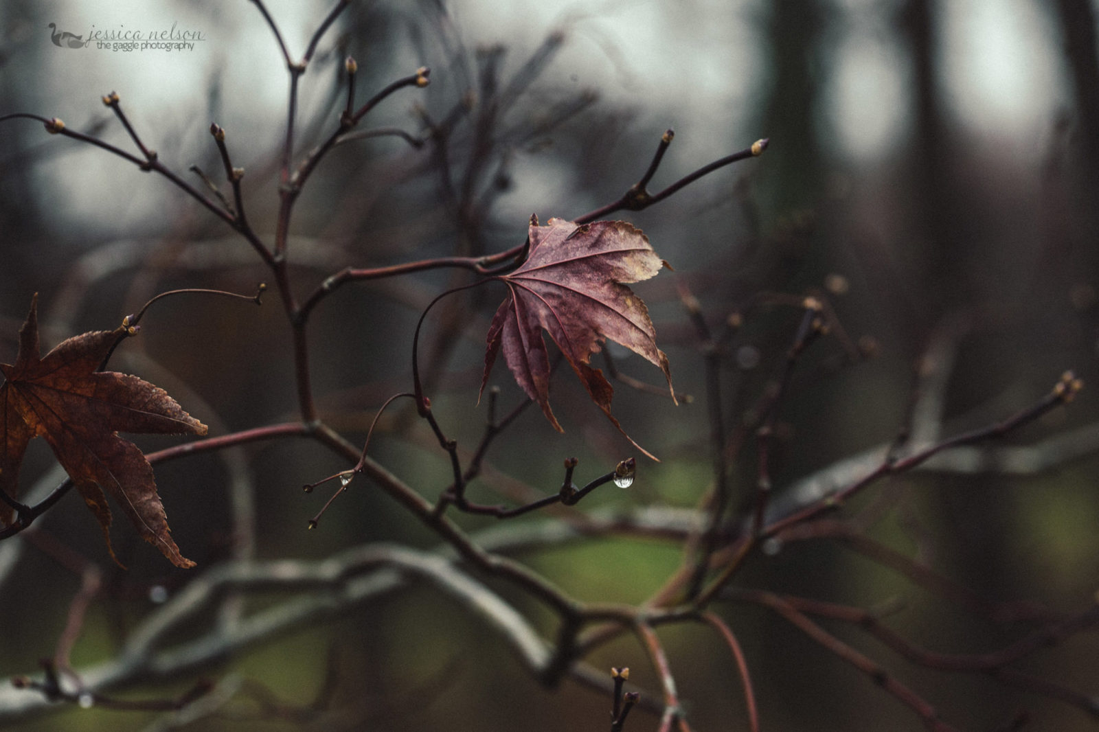 Moody Macro Maple