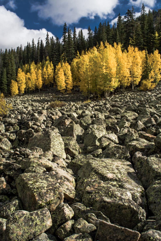Aspens in granite
