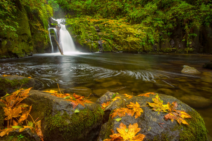 Sweet Creek Falls in Autumn