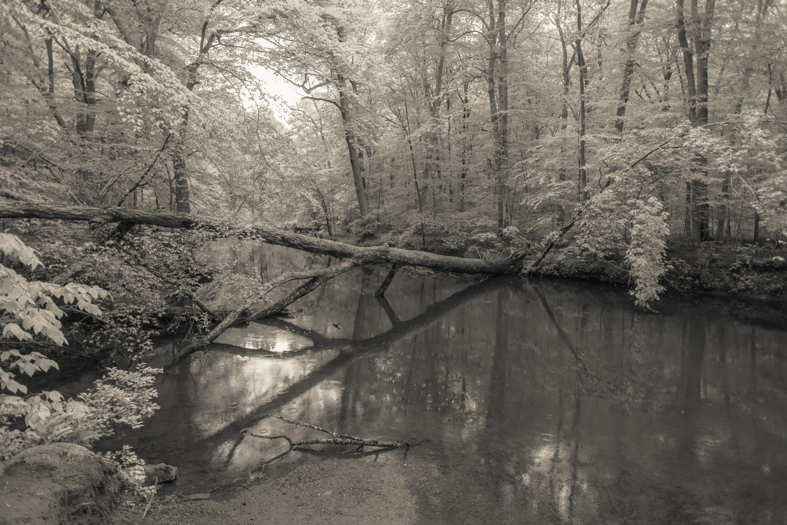 Ridley Creek before the fall