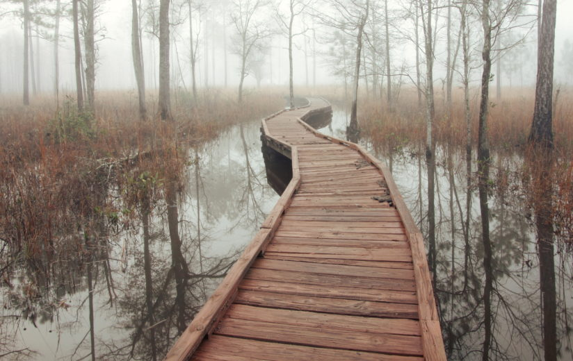 Flooded Flatwoods