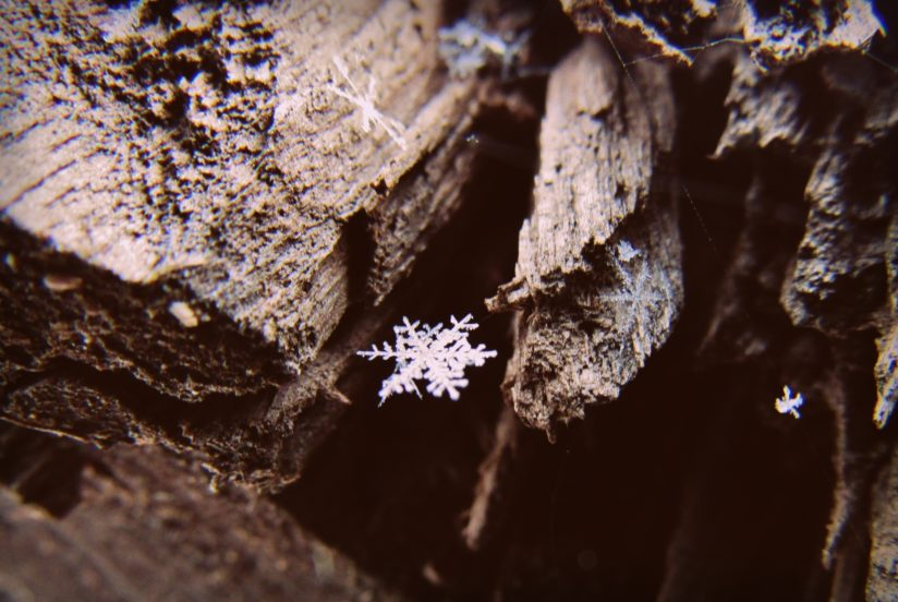 Beauty of a Falling Flake