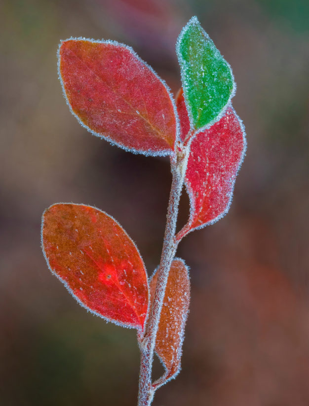 Late Autumn Frost
