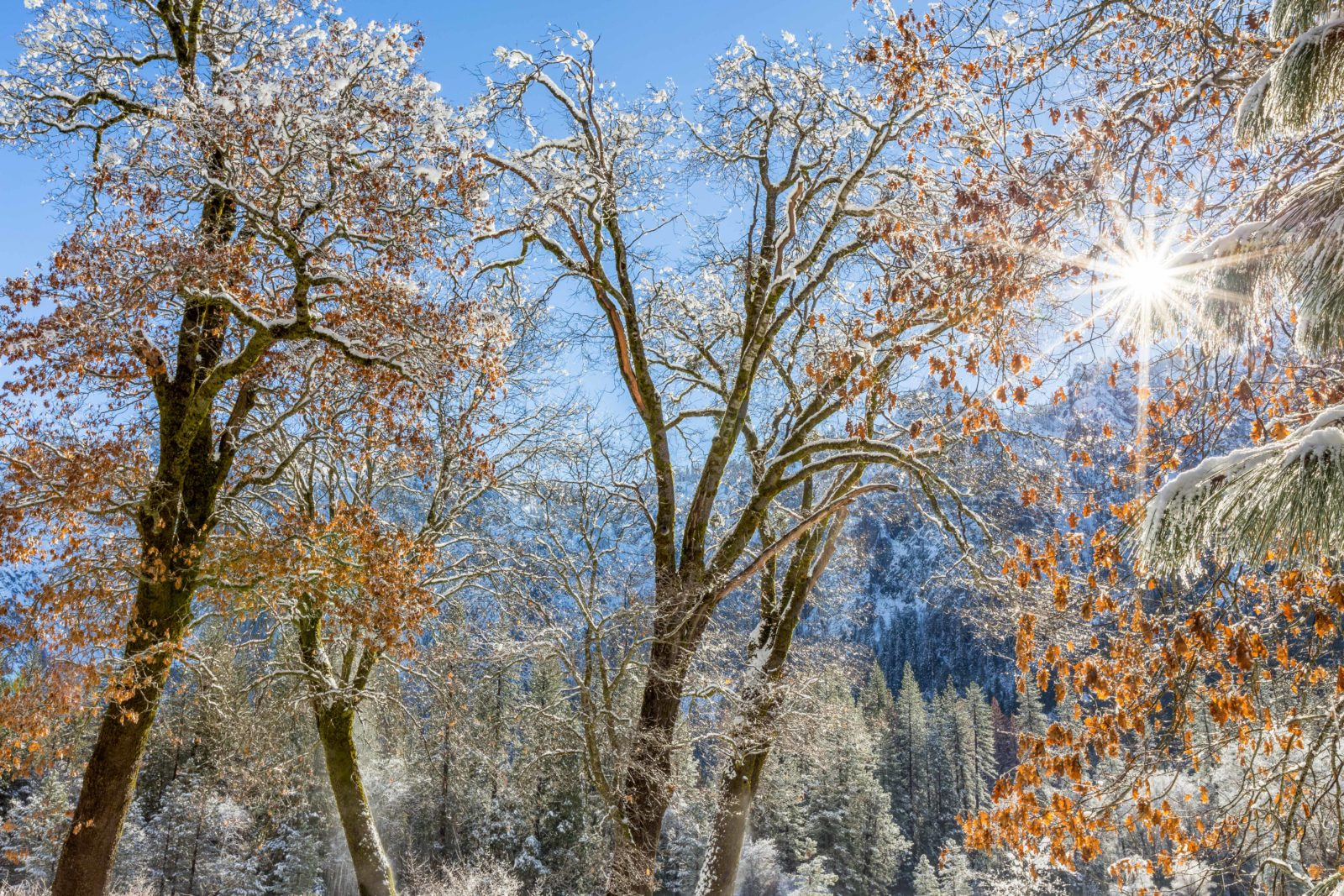El Capitan Meadow Winter Tapestry