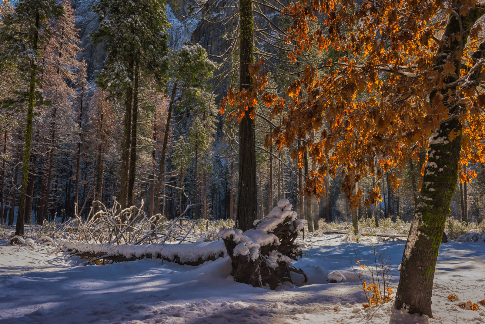 Winter Upon The Colors And Light Of Nature