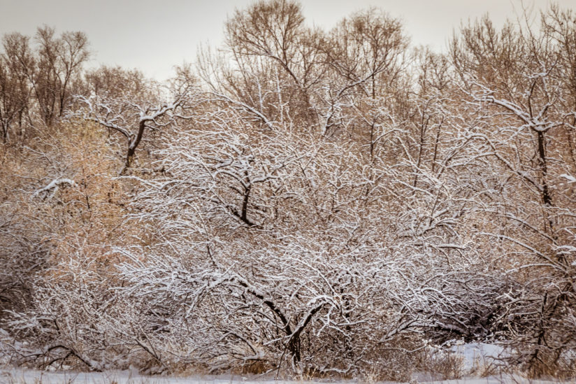 Snow Patterns in Trees