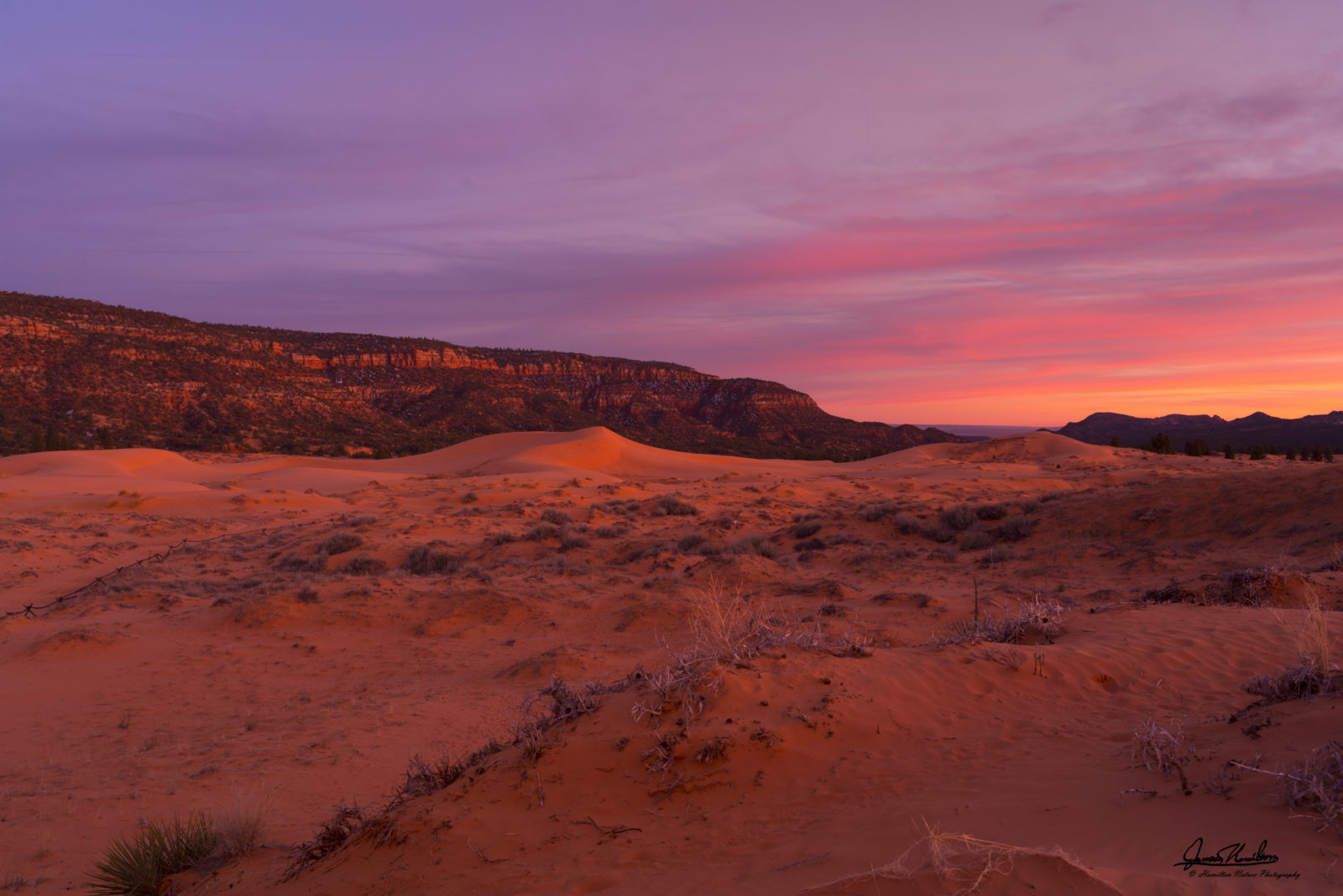 Sunset Light on Coral Pink Sand Dunes