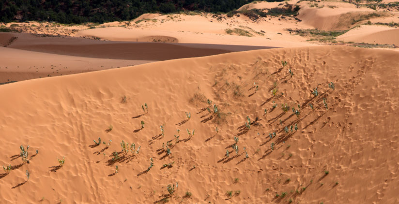 Coral Pink Sand Dunes