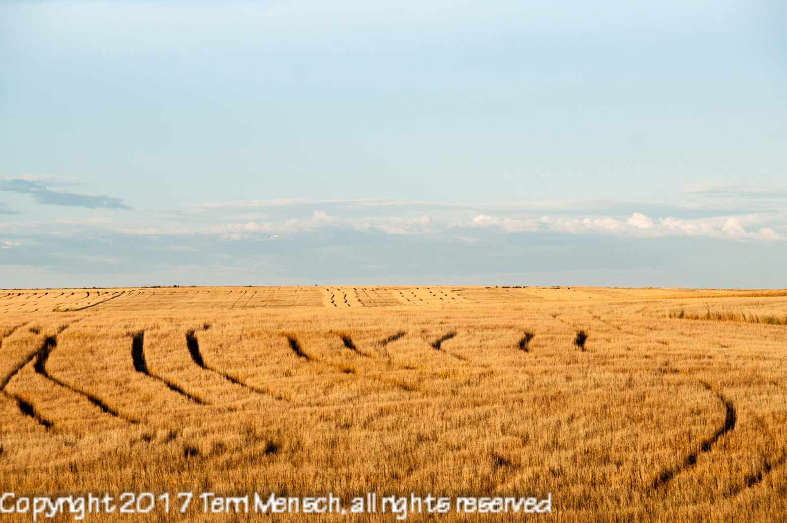 Denver Wheatfields