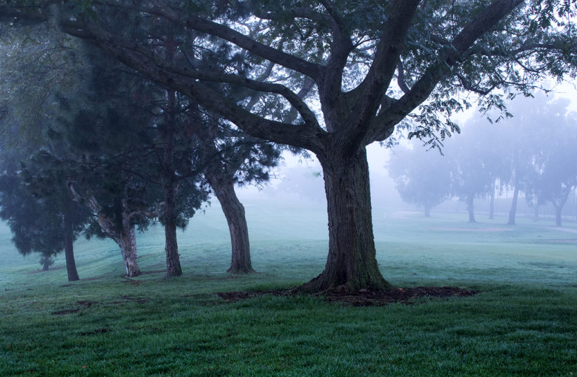 early morning golf course trees
