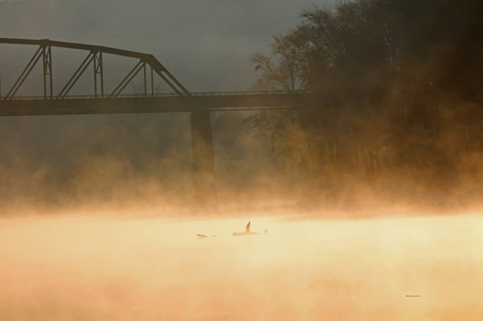 Early morning on the Duck River