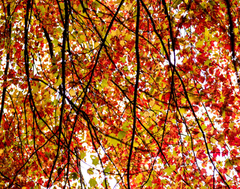 Read Leaves Fall Abstract
