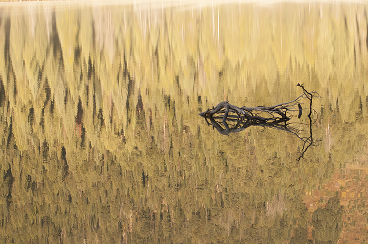 Driftwood Reflection