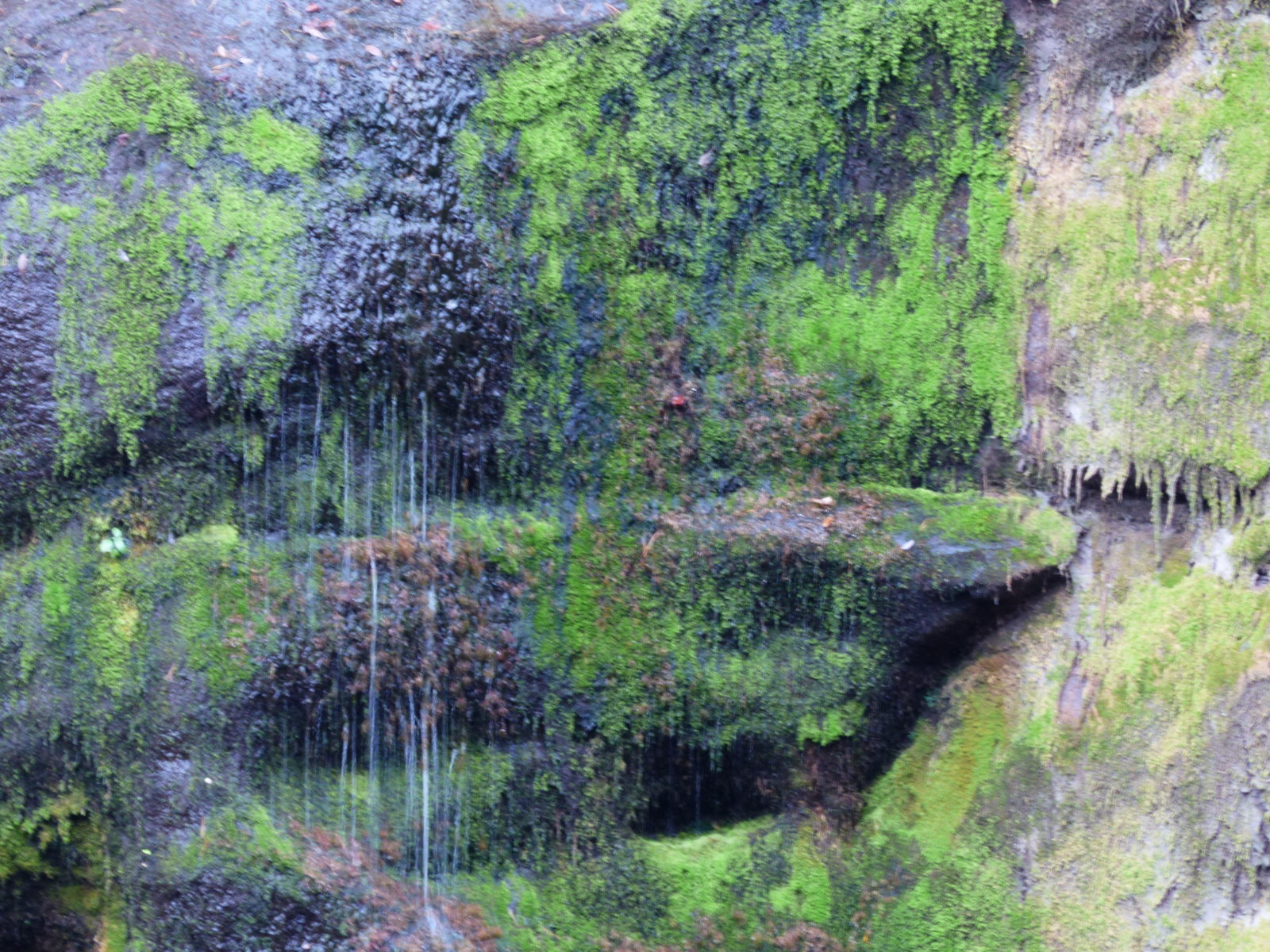 Impressionistic Moss and Waterfall Closeup