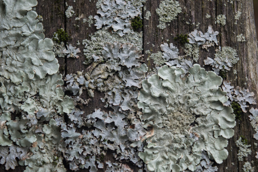 An old chair gathers lichen