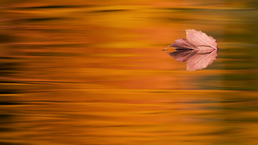 Floating in Fall Flames