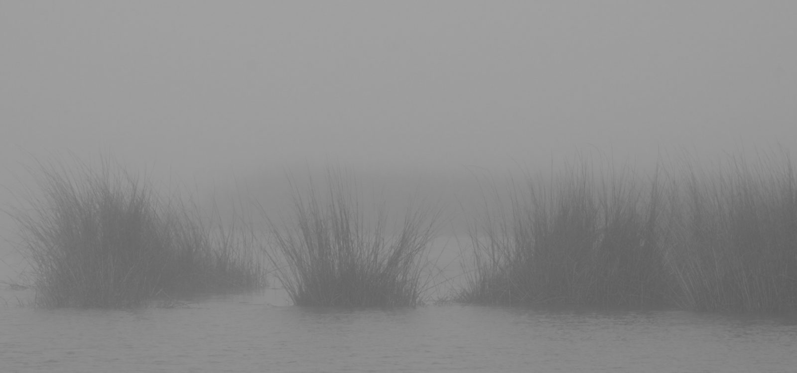 Misty Morning in the Bayou