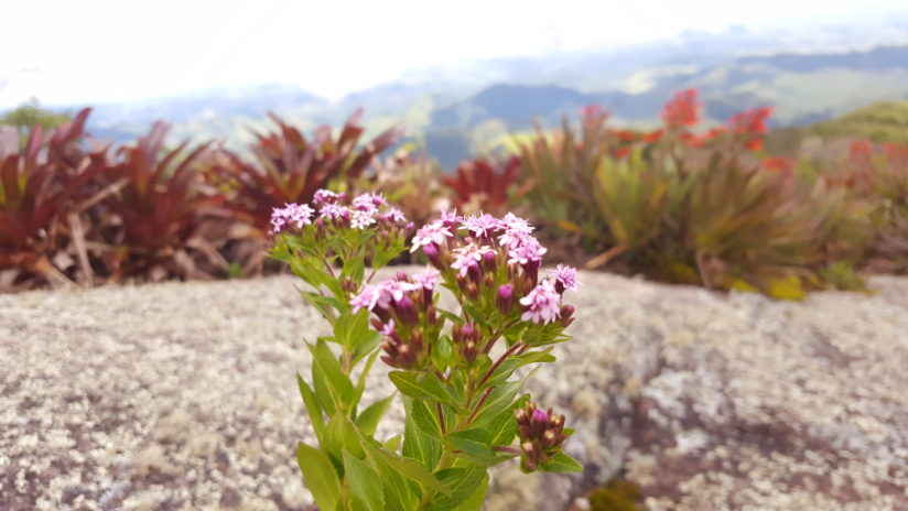Chain of montains Behind my flower