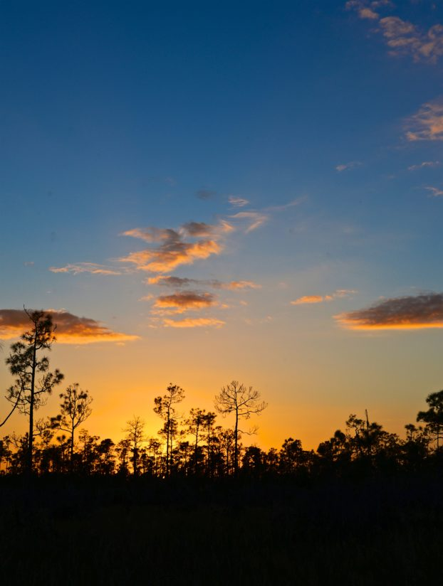 Main Road at Sunset: Everglades National Park