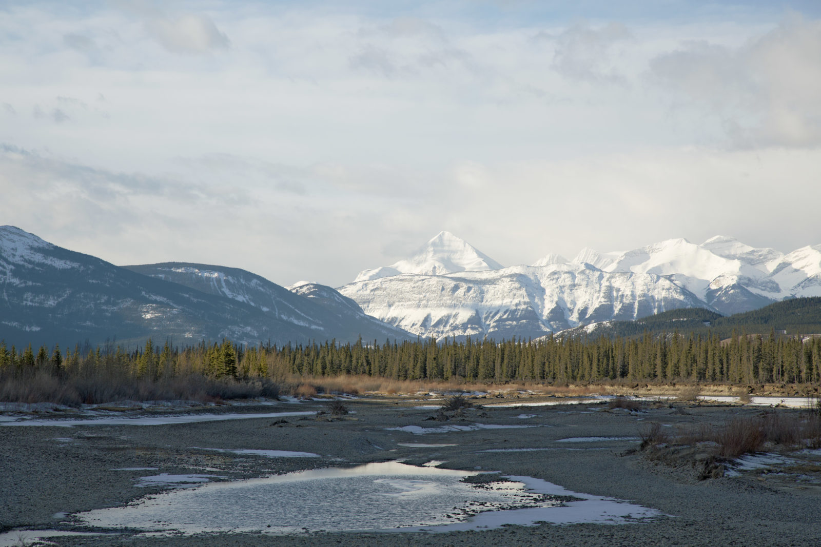Morning sun in the Athabasca valley