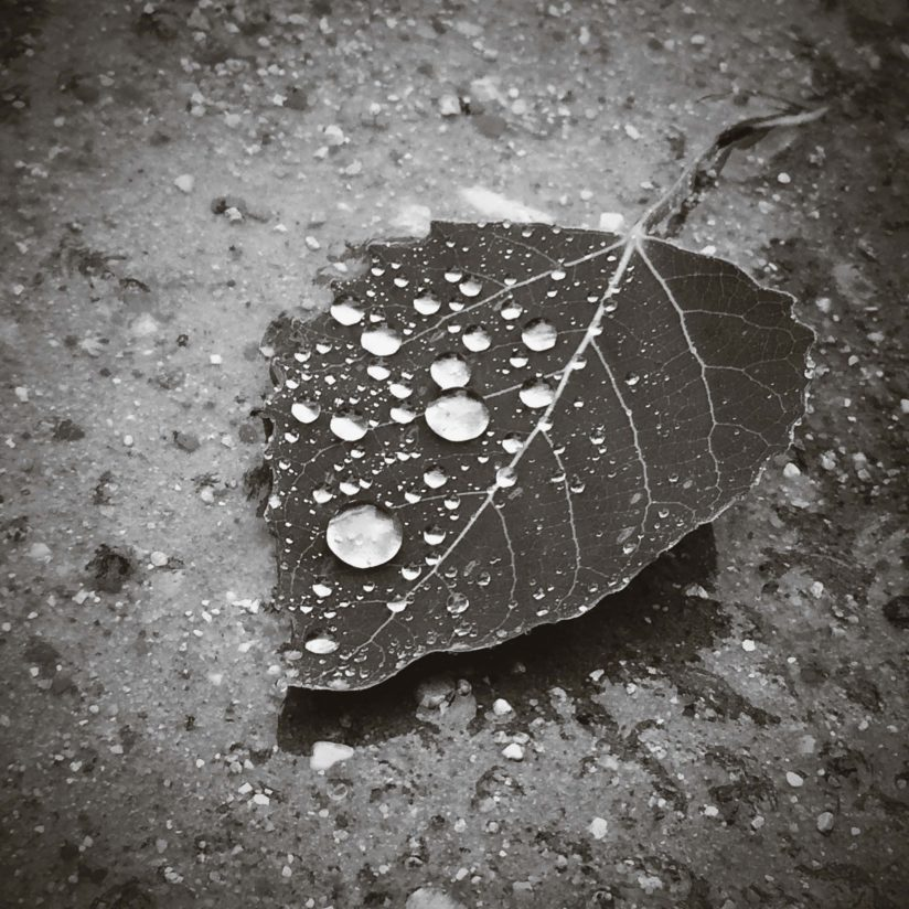 Rain Drop on a Lone Leaf