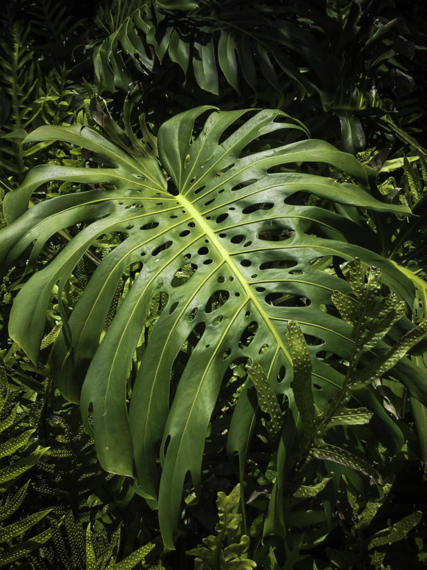 Tropical Foliage