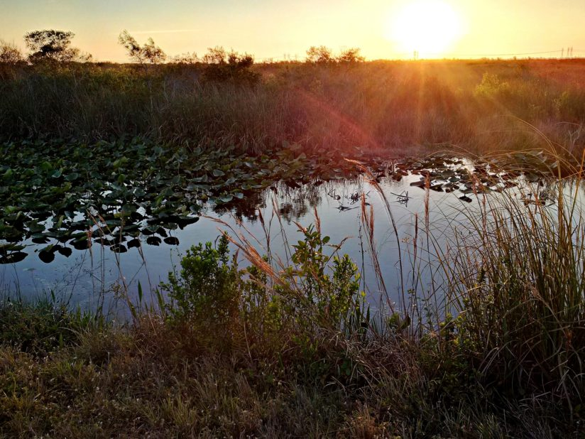Sun-rays By The Everglades