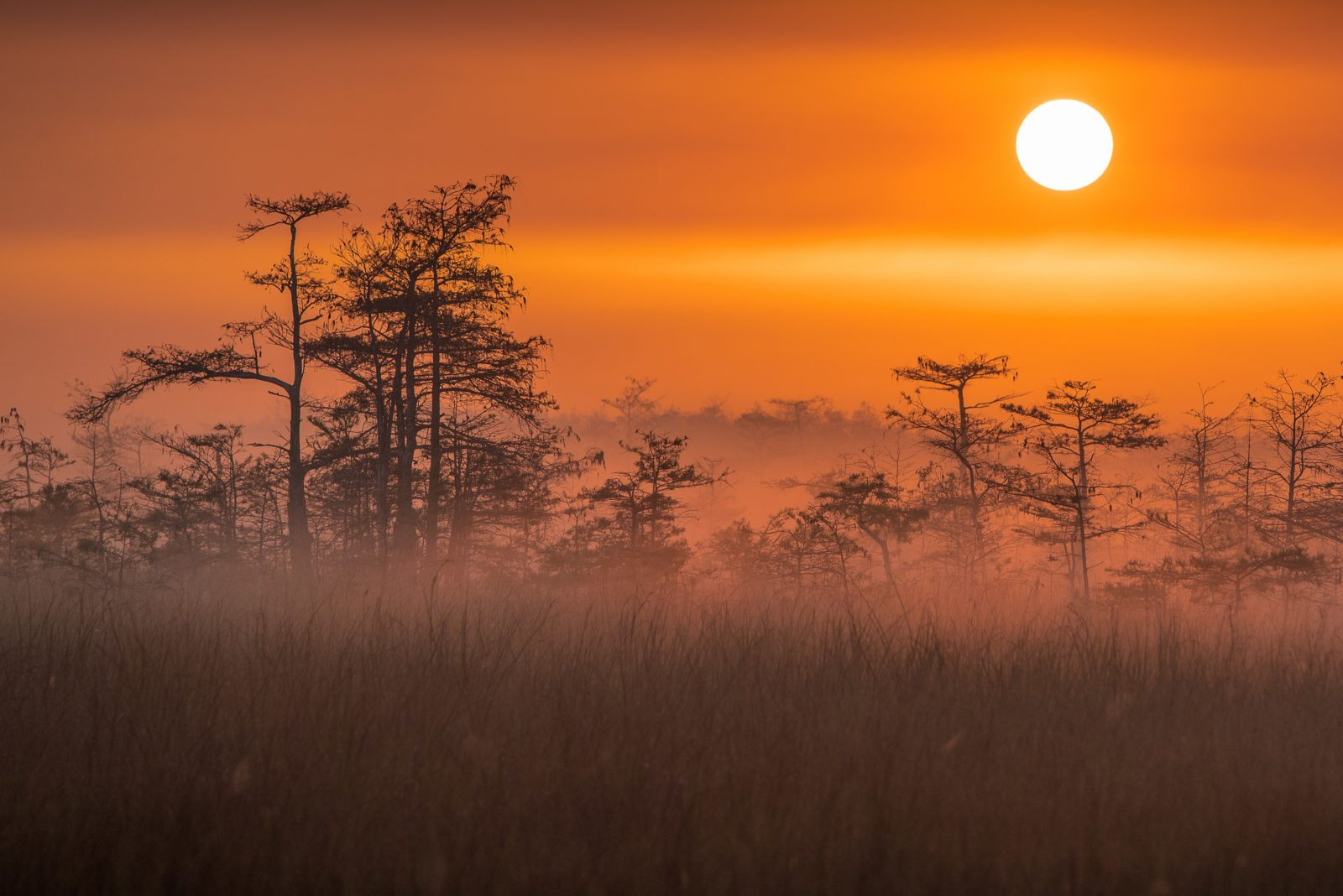 Morning Mist in the Everglades