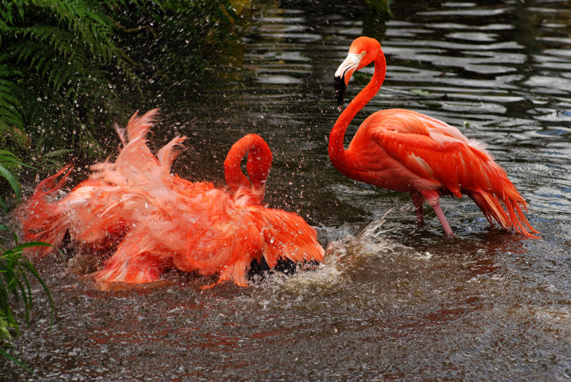 Flamingo Shower