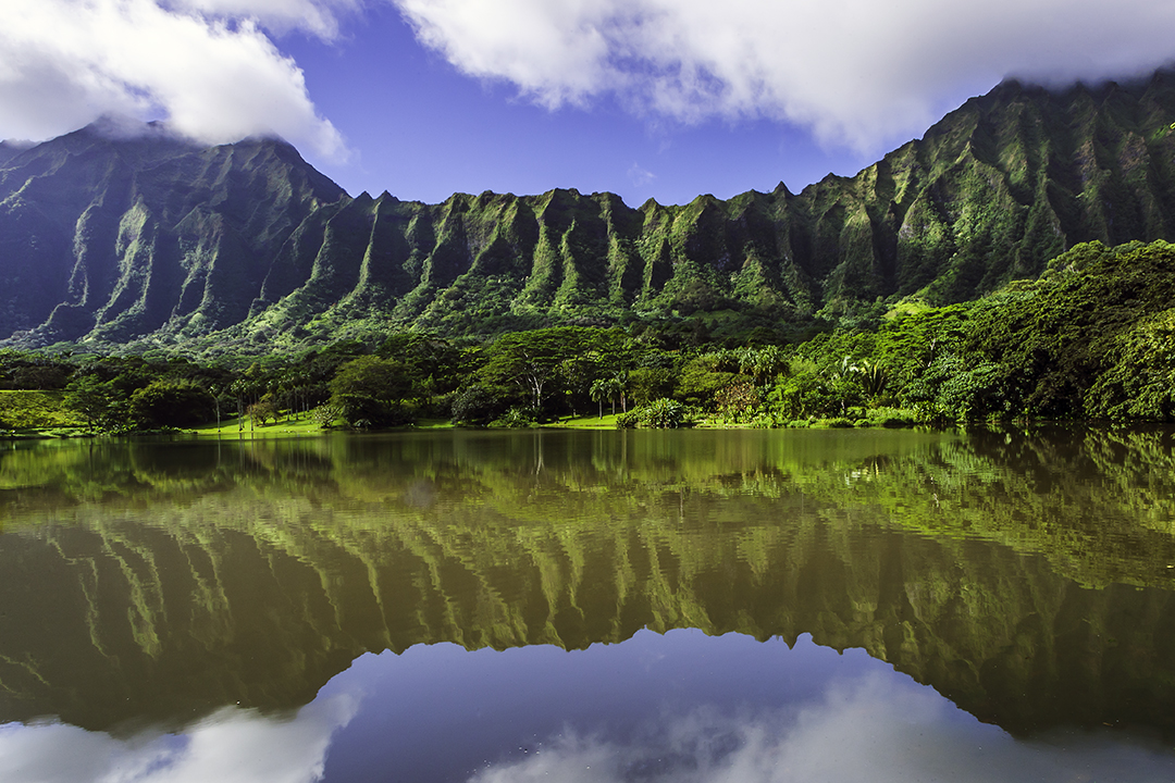 Majestic Koolau's