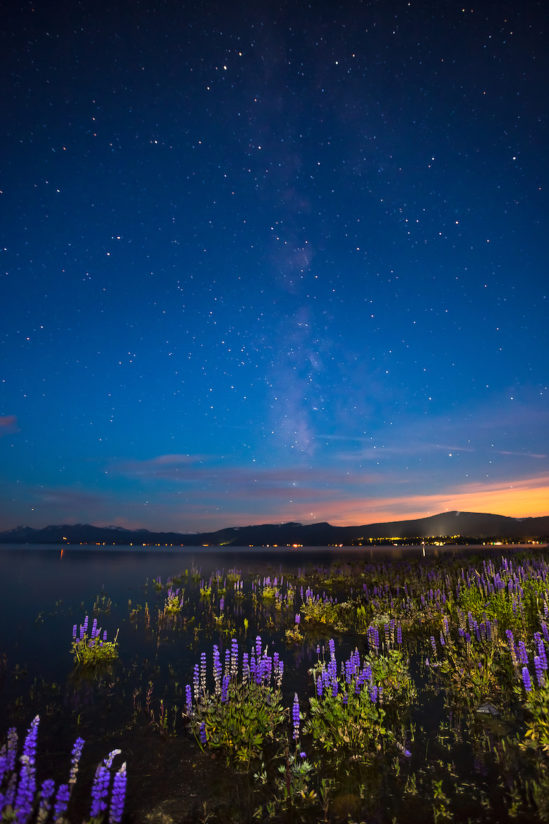 Tahoe Lupine at Night 3