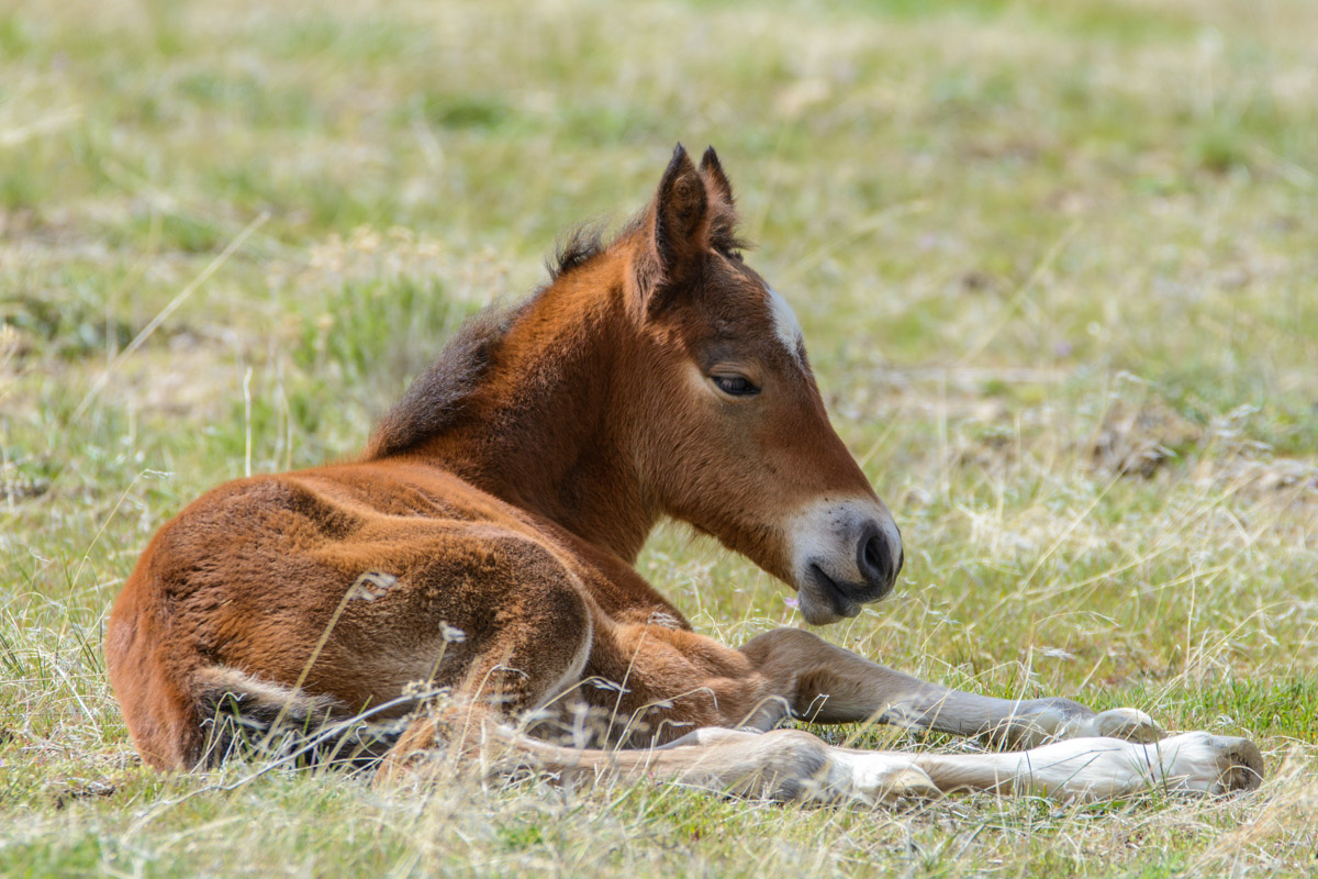 Wild Foal in the Sunshine
