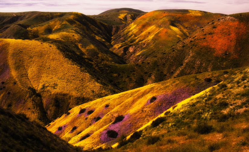 Carizzo Plains Super Bloom