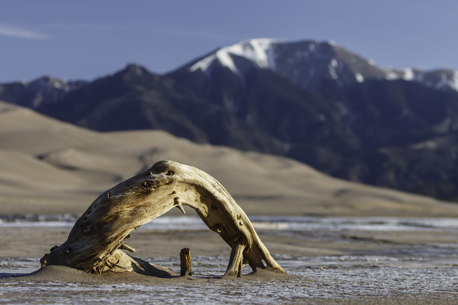Driftwood with Mount Herard