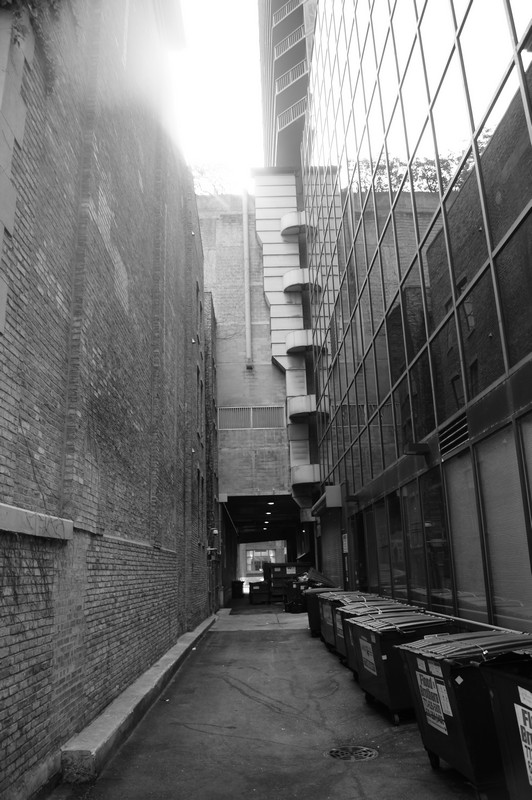 Dumpsters Lining Back Alley, Chicago