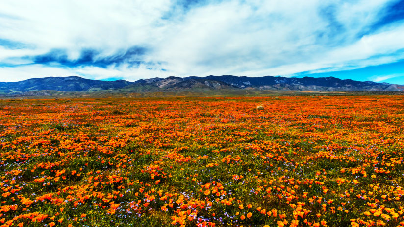 Glorious Super Bloom