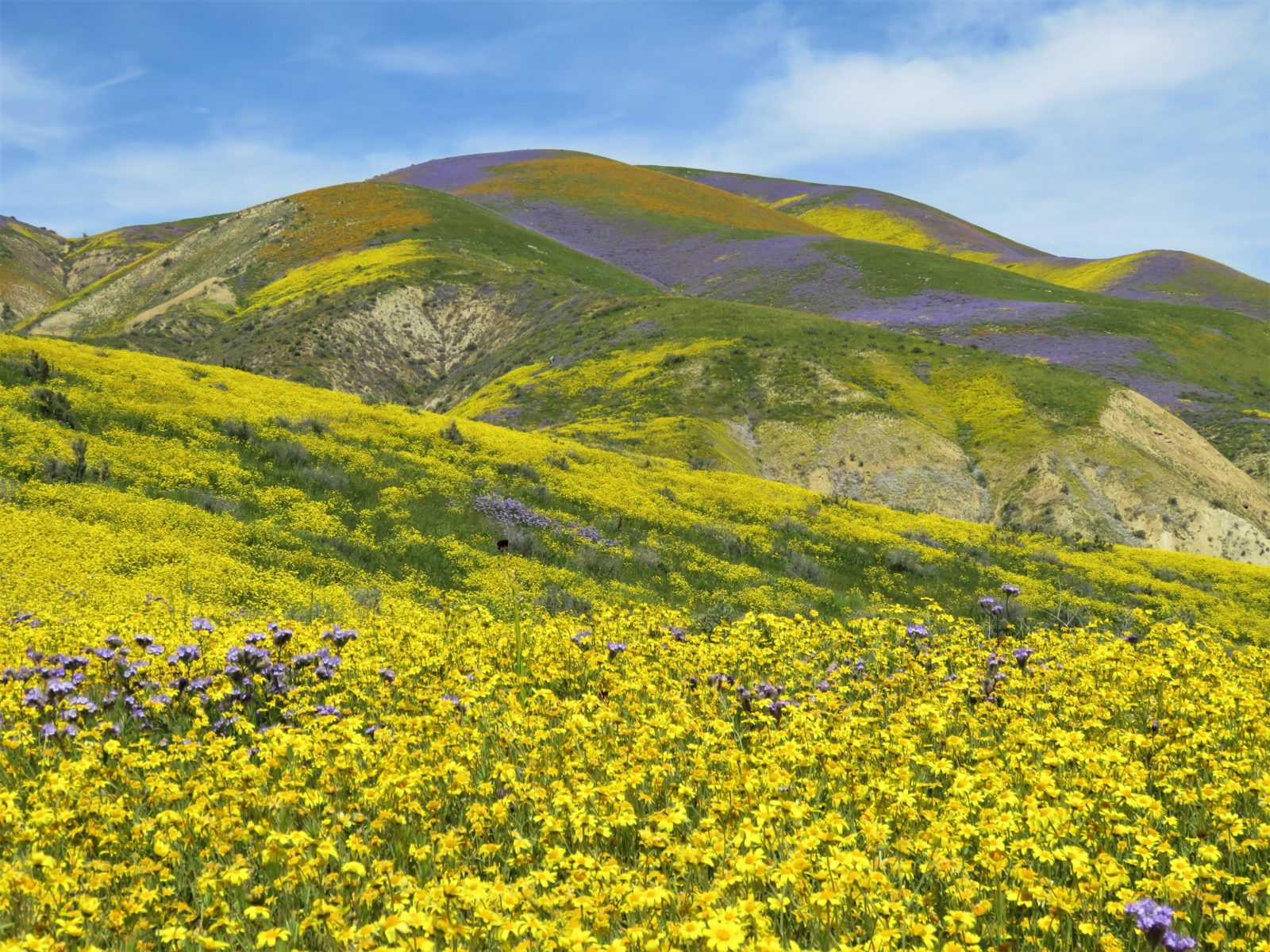 Temblor Range Carrizo Plain