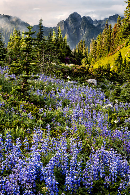 Alpine Garden, Mt. Rainier, Washington