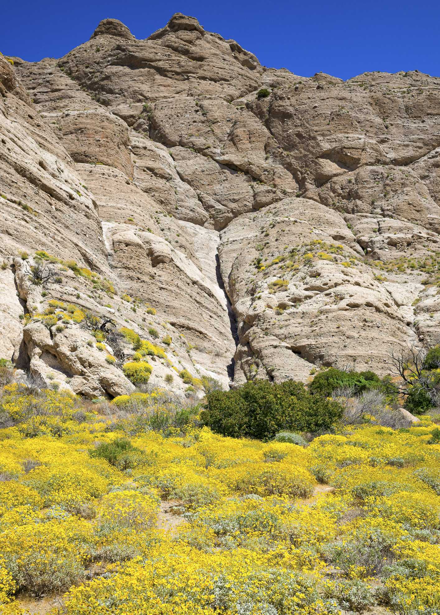 Whitewater Canyon Wildflowers