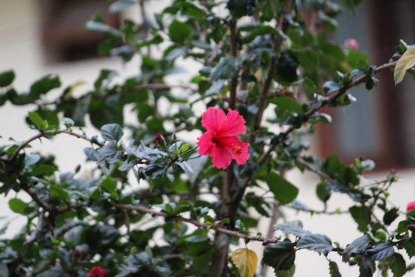 Blooming in evening