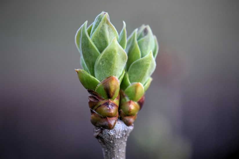 Beginning To Bud