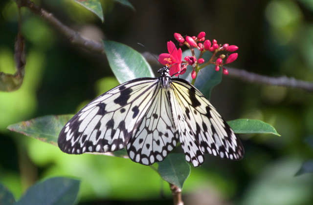 White Butterfly on Red Flower