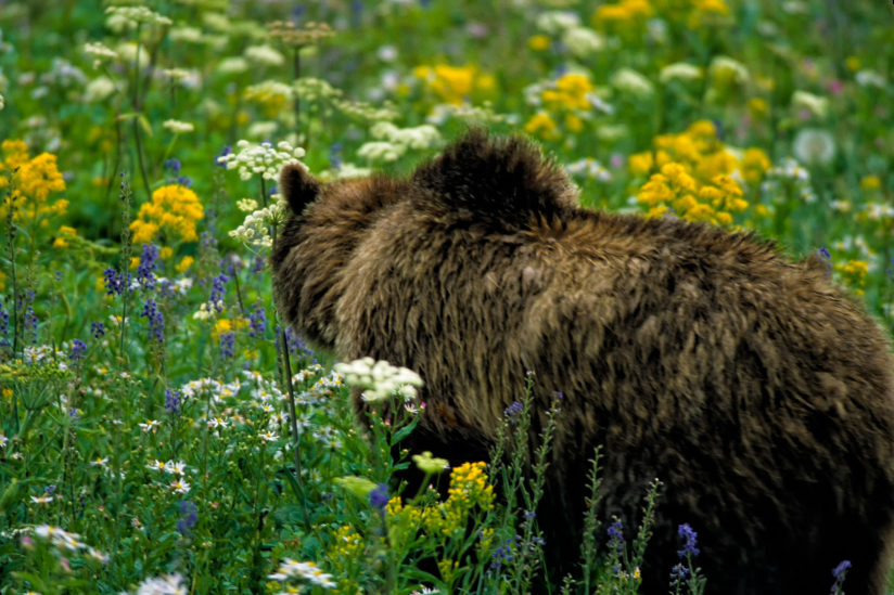 Bear and Wld Flowers