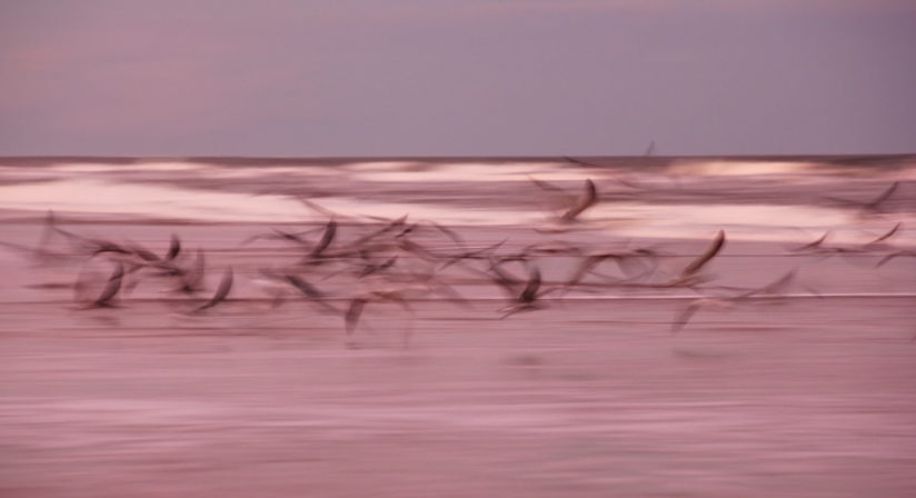 Birds in Motion
