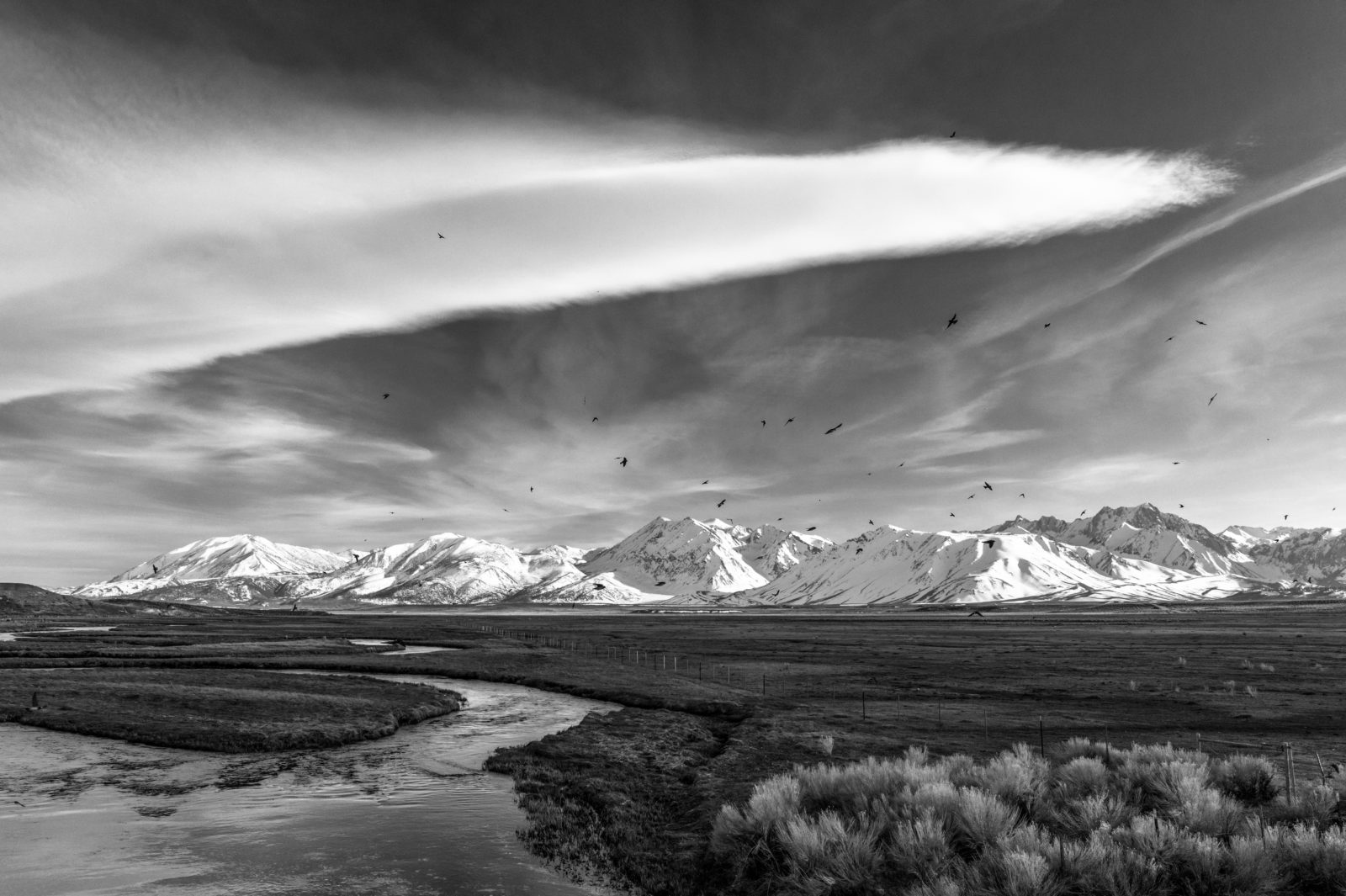 Swallows in Flight, Owens River Valley